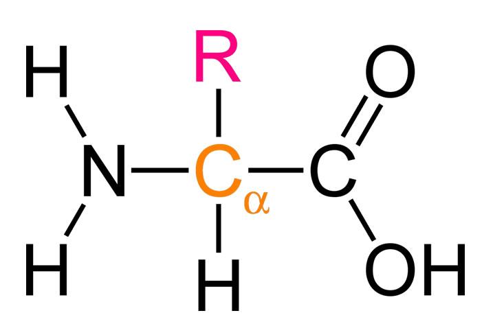 Proteinlerin Yapı Taşı Aminoasitler
