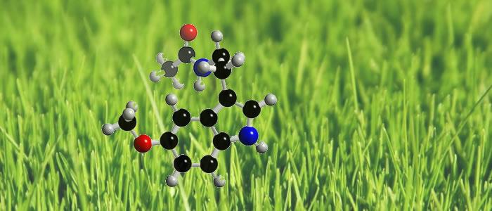 Organik Moleküllerin Bitkilerdeki Kullanım Alanları