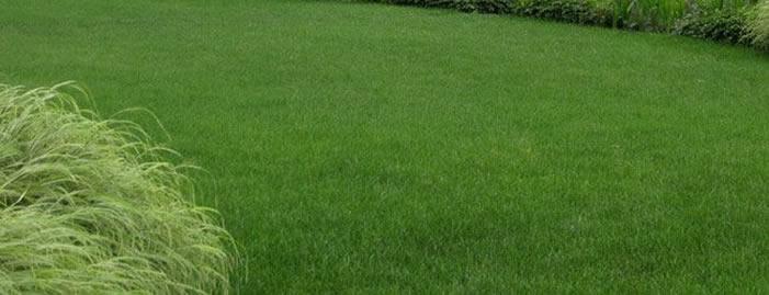 İrlanda'da çimlerden alternatif enerji üretimi