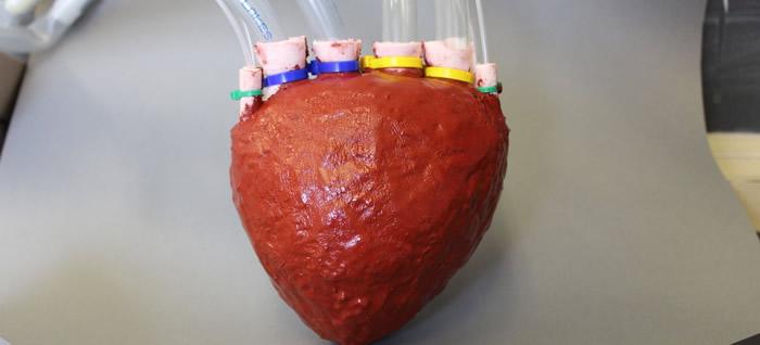 Bilim insanları polimerden kalp yaptı