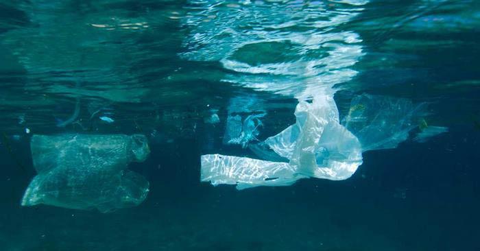 Plastik çöpler Kuzey Kutbu'nda