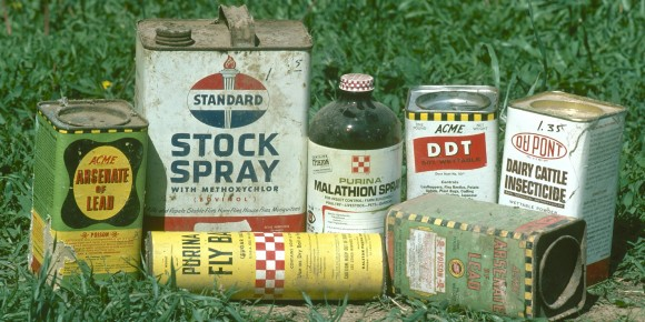 Kuş, Balık ve Yunuslarda Kimyasal Pestisitler Tespit Edildi