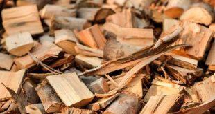 mantarlarin yardimi ile biokutle yakarak yesil e destek olunabilir 310x165 - Mantarların Yardımı İle Biokütle Yakarak Yeşil'e Destek Olunabilir