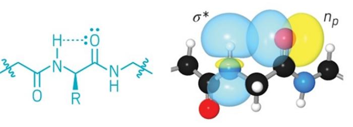 Olağandışı hidrojen bağları proteinlerde kimyacıların düşündüğünden daha büyük bir rol oynuyor