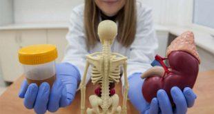 yeni kesfedilen polimer tehlikeli bobrek hastaligini onceden uyariyor 310x165 - Yeni Keşfedilen Polimer Tehlikeli Böbrek Hastalığını Önceden Uyarıyor