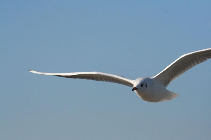 Kuşlar plastik atıkları yaydığı koku nedeniyle tüketiyor