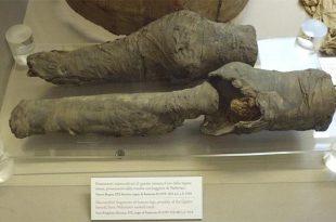 gaz kromatografisi mumyalanmis bacaklarin misir in kayip kralicesine ait oldugunu ortaya cikardi 310x205 - Gaz Kromatografisi Mumyalanmış Bacakların Mısır'ın Kayıp Kraliçesine Ait Olduğunu Ortaya Çıkardı