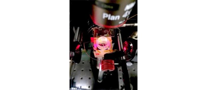 Yeni grafen bazlı sistem, kalp ve sinir hücrelerindeki elektrik sinyalizasyonunu görmemize yardımcı olabilir