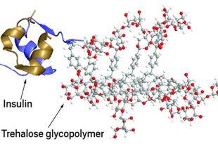 polimerin protein ilacinin stabilitesini gelistirdigi belirlendi 310x205 - Polimerin Protein İlacının Stabilitesini Geliştirdiği Belirlendi