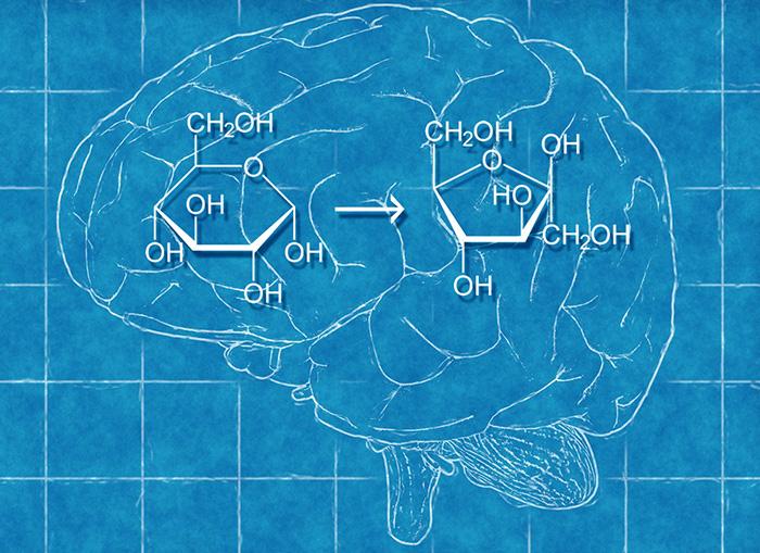 Beyin Glikozdan Fruktoz Üretir