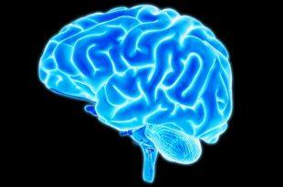 beynin gizemini cozmek icin esnek sentetik lif uretildi 310x205 - Beynin gizemini çözmek için esnek sentetik lif üretildi