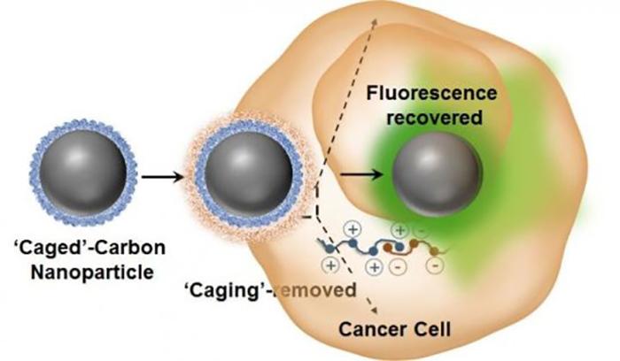Lüminesans değiştirilebilir karbon nanodots, hücre içi ticareti ve ilaç dağıtımını takip ediyor