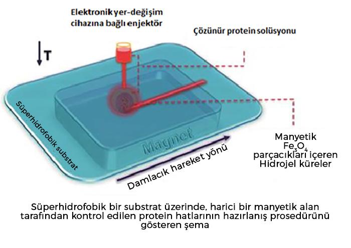 Manyetik damlacıklar protein desenleri oluşturuyor
