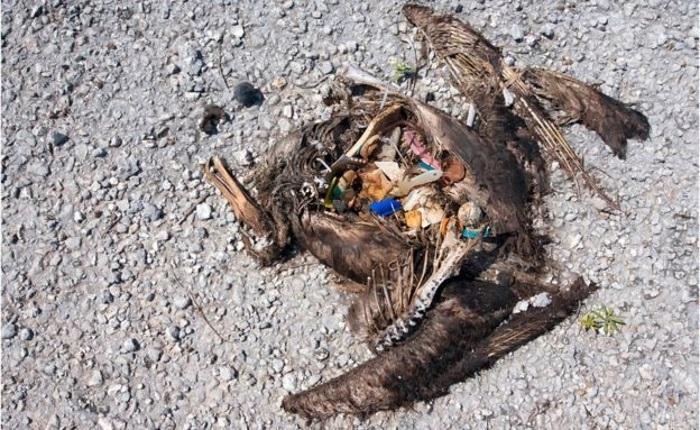 """Coca Cola'nın plastik şişelerinin okyanuslara zararı """"Şok Edici Boyutlarda"""""""