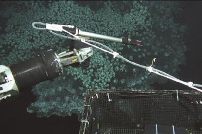 Hidrotermal Ağızlar Açık Deniz Akıntıları Oluşturur