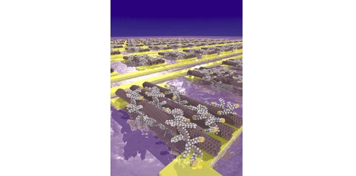 Karbon Nanotüpler Küçük Transistörlere Kendiliğinden Monte Ediliyor