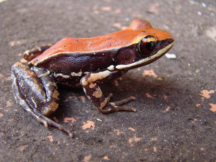 Kurbağaların Yardımı ile Grip Virüsleri Ortadan Kalkıyor