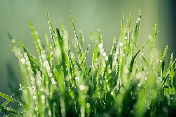 Neden Yağmur Yağdıktan Sonra Çimleriniz Daha Yeşil Görünür?