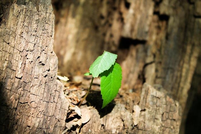 Sentetik Fotosentez? Yeni Teknikler Karbondioksiti Bitkilerden Daha Hızlı Geri Döndürüyor
