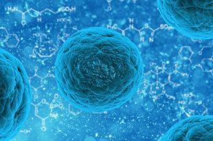 kanser terapisi beklenmedik sekilde ise yarayabilir 310x205 - Kanser Terapisi Beklenmedik Şekilde İşe Yarayabilir
