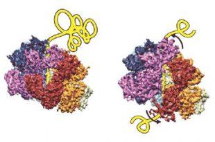 disagregazin biyolojik ayristirici calisma mekanizmasi bulundu 310x205 - Disagregaz'ın (Biyolojik Ayrıştırıcı) Çalışma Mekanizması Bulundu