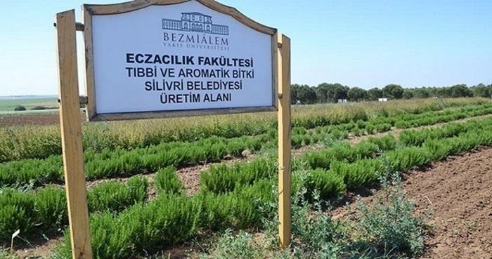 Türkiye İlk Kez İlaç Sanayisi için Bitki Yetiştiriyor