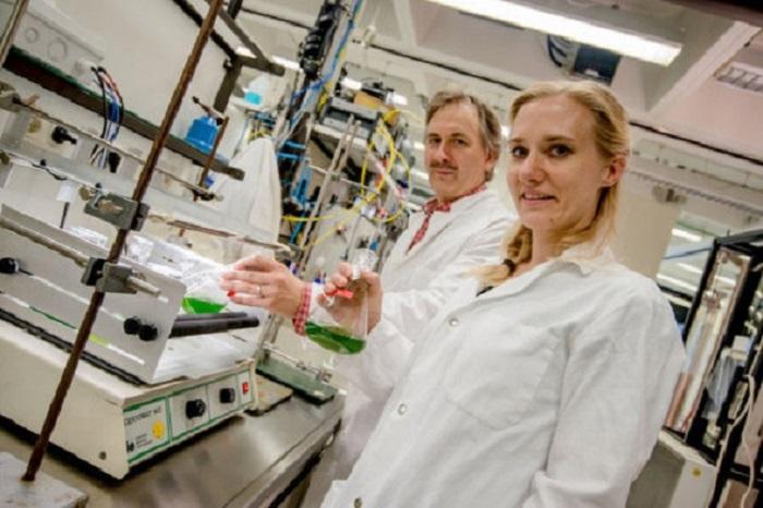 Bakteriyel Enzimin Yeşil Alglerdeki Serüveni