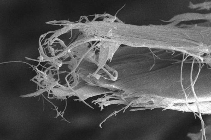 Beyaz Asbestin Listelenmesi Üst Düzey İhracatçılar Tarafından Engellendi