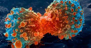 buyuk sir kanser tedavisindeki gizemli molekul 310x165 - Büyük Sır : Kanser Tedavisindeki Gizemli Molekül