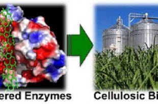 etanol biyoyakitlar benzinin maliyetinin dusurulmesi 310x205 - Etanol, Biyoyakıtlar ve Benzinin Maliyetinin Düşürülmesi