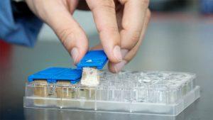 bilim insanlari olumcul mantarlarla nasil savasiyorlar 300x169 - bilim-insanlari-olumcul-mantarlarla-nasil-savasiyorlar