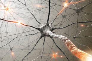insan beynini kandirma laboratuvar yapimi yapay zeka sinapslar 310x205 - İnsan Beynini Kandırma: Laboratuvar Yapımı Yapay Zeka Sinapslar