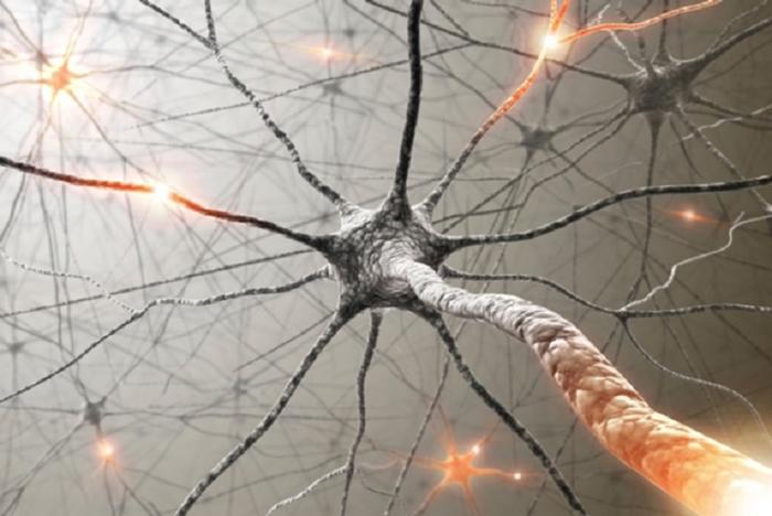 İnsan Beynini Kandırma: Laboratuvar Yapımı Yapay Zeka Sinapslar