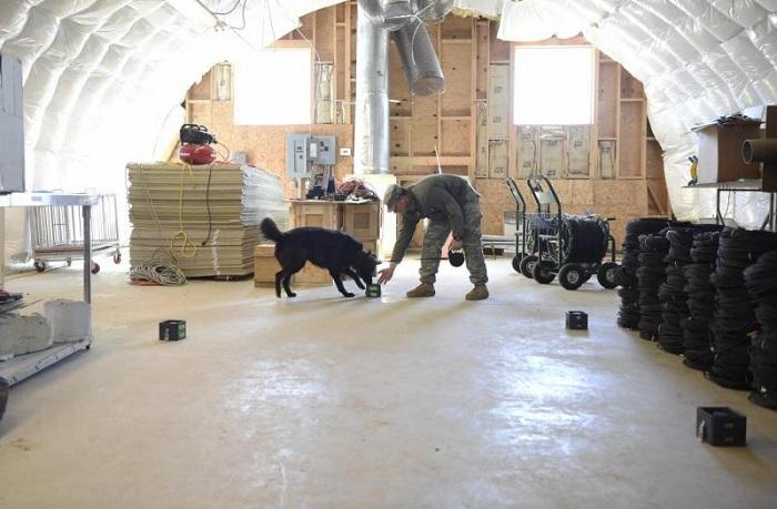Suç Araştırma Laboratuarı Kimyagerleri Köpek Birimini Koku Tespitinde Eğitmek İçin Cihaz Geliştiriyor