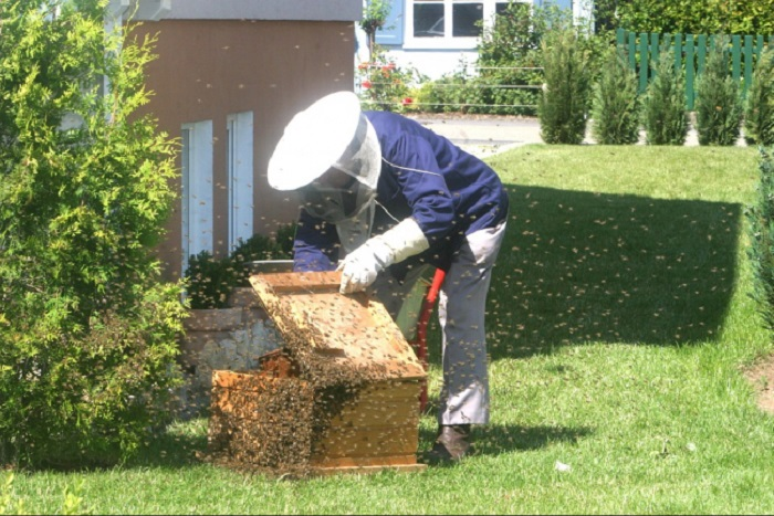 Bal Arıları Antibiyotiğe Direnç Gösteren Bakterilerle Savaşabilir