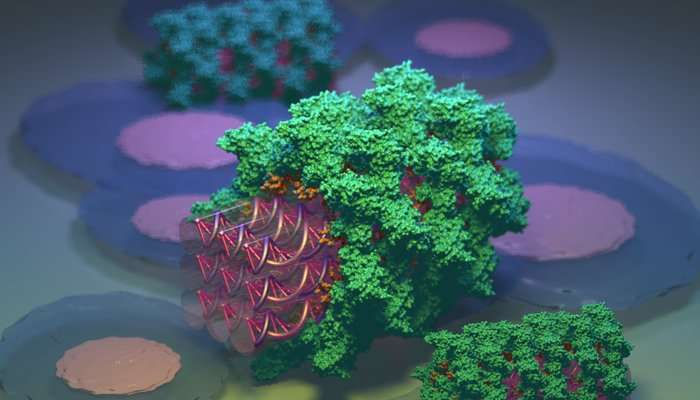 dna nanoyapilari proteinlerle kamufle edildi - DNA Nanoyapıları Proteinlerle Kamufle Edildi