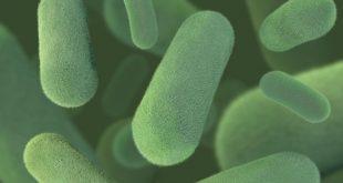 hucre kullaniminda bir ilk bakterilerden florlanmis biyoplastik uretimi 310x165 - Hücre Kullanımında Bir İlk: Bakterilerden Florlanmış Biyoplastik Üretimi!