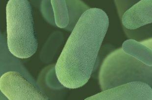hucre kullaniminda bir ilk bakterilerden florlanmis biyoplastik uretimi 310x205 - Hücre Kullanımında Bir İlk: Bakterilerden Florlanmış Biyoplastik Üretimi!