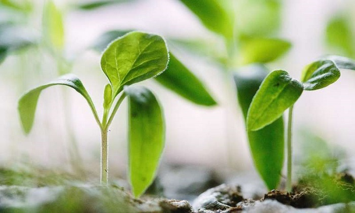 Küresel Gıda Üretimindeki Büyük Soruna Çok Küçük Bir Çözüm!
