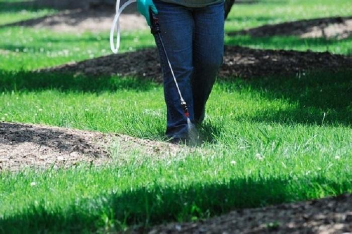 Yol Kenarındaki Yabani Otları ve Çimenleri Öldürmek için Kimyasal Kullanımı