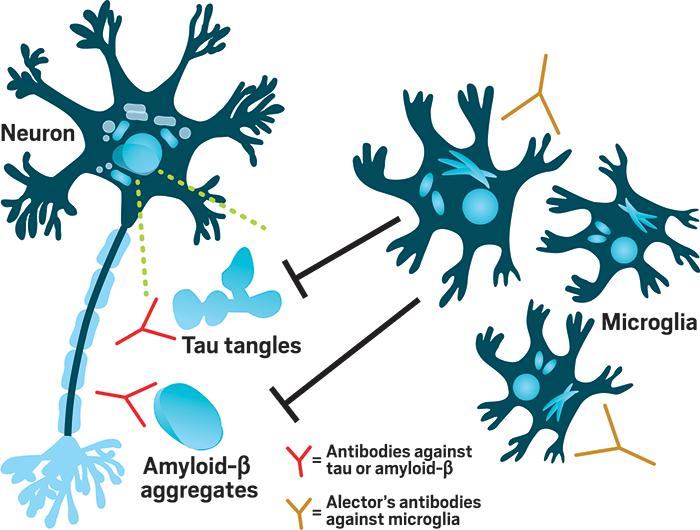 AbbVie, Alzheimer Hastalığı için Alector'un İmmüno-Nöroloji Tedavilerine Yatırım Yapıyor