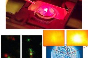 beyin kimyasinin gizemini cozen nanosensorler 310x205 - Beyin Kimyasının Gizemini Çözen Nanosensörler