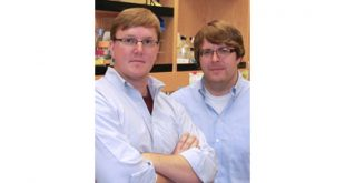 bilim adamlari stresli mitokondri icin yeni hayatta kalma mekanizmasi kesfetti 310x165 - Bilim Adamları Stresli Mitokondri için Yeni Hayatta Kalma Mekanizması Keşfetti