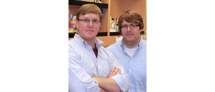 Bilim Adamları Stresli Mitokondri için Yeni Hayatta Kalma Mekanizması Keşfetti