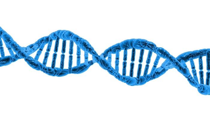 Bilim Adamları Yeni Bir Moleküler Evrim Teorisi Geliştiriyor