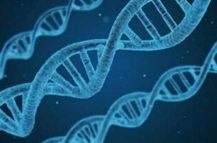 gen ifadesinde etkili proteinin kesfedilmesi 310x205 - Gen İfadesinde Etkili Proteinin Keşfedilmesi