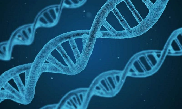 Gen İfadesinde Etkili Proteinin Keşfedilmesi