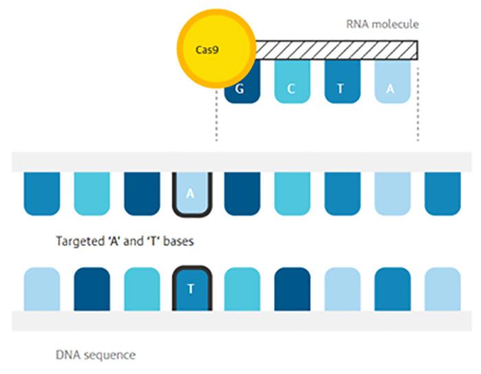 genetik mutasyonlari kimyasal cerrahi ile duzeltebilmek mumkun mu 1 - Genetik Mutasyonları 'Kimyasal Cerrahi' ile Düzeltebilmek Mümkün mü?