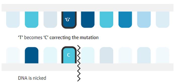 genetik mutasyonlari kimyasal cerrahi ile duzeltebilmek mumkun mu 3 - Genetik Mutasyonları 'Kimyasal Cerrahi' ile Düzeltebilmek Mümkün mü?