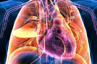 insan vucudundan elektrik ureten malzeme 310x205 - İnsan Vücudundan Elektrik Üreten Malzeme!